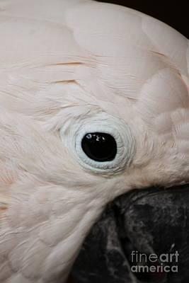 Photograph - Bird's Eye View by Terri Thompson