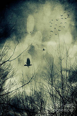 Creepy Photograph - Birds In Flight Against A Dark Sky by Sandra Cunningham