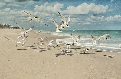 Photograph - Birds In Flight by Cheryl Davis