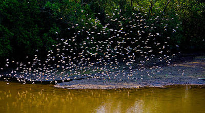 Photograph - Birds In Tropical Jungle by Chua  ChinLeng