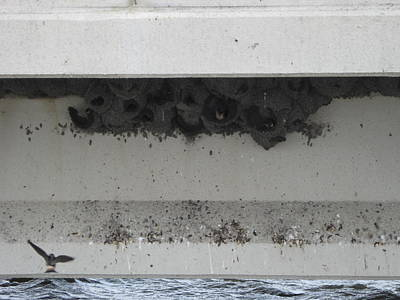 Photograph - Birds Nest Under The Bridge. by Sima Amid Wewetzer
