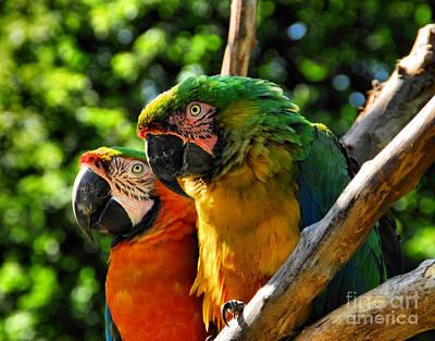 Moody Trees - Birds of a Feather by Andrea Kollo