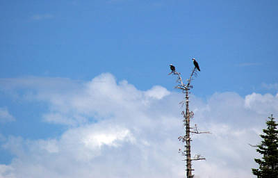 Nevada Photograph - Birds Of Prey At Peace by LeeAnn McLaneGoetz McLaneGoetzStudioLLCcom