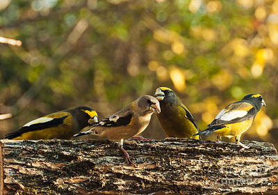 Fall Photograph - Birds Of Yellow by Cheryl Baxter