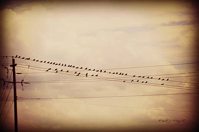 Photograph - Birds On A Wire Dark Tint by Paulette B Wright