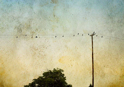 Art Print featuring the photograph Birds On A Wire by Karen Lynch