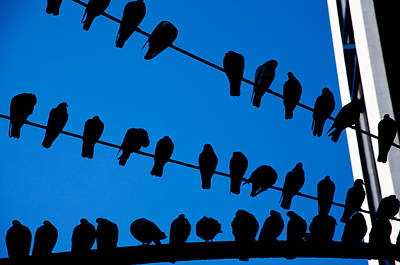 Photograph - Birds On A Wire by Karol Livote