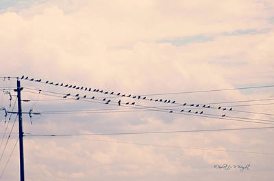 Photograph - Birds On A Wire Pink And Blue by Paulette B Wright