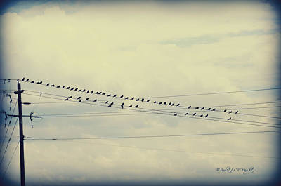 Photograph - Birds On A Wire Polaroid by Paulette B Wright