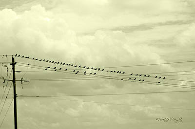Photograph - Birds On A Wire Tinted by Paulette B Wright
