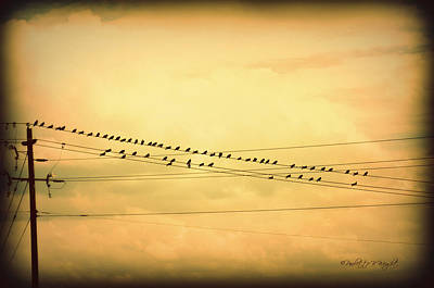 Photograph - Birds On A Wire Yellow Orange by Paulette B Wright