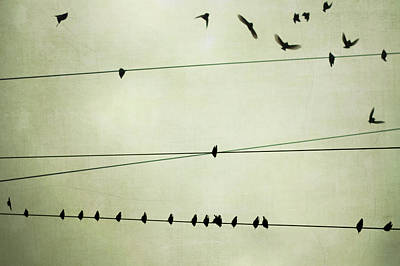 Flock Of Bird Photograph - Birds On Telephone Wire by Lucy Loomis, Photographer