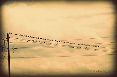 Photograph - Birds On Wires Back In Time by Paulette B Wright