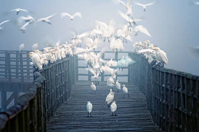 Birds Art Print by Zu Sanchez Photography