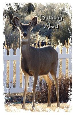 Photograph - Birthday Alert Card by Cindy Wright
