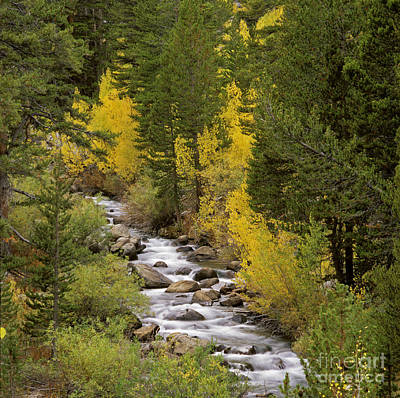 Photograph - Bishop Creek - Eastern Sierra by Craig Lovell