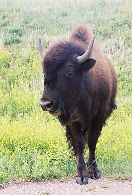 Art Print featuring the photograph Bison by David Wohlfeil