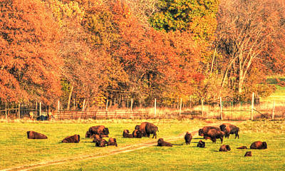 Photograph - Bison Fall by Coby Cooper