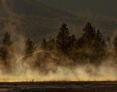 Bison In The Mist Art Print