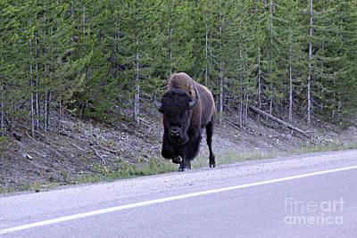 Bison On Road Art Print