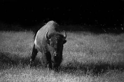 Bison Art Print by Ralf Kaiser