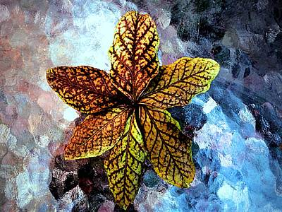 Bittersweet Digital Art - Bittersweet Leaves by Beth Akerman