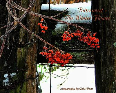 Amish Community Photograph - Bittersweet The Winter Flower by Julie Dant
