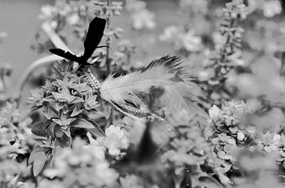 Photograph - Black And Brown Feathers In The Bush  by Puzzles Shum