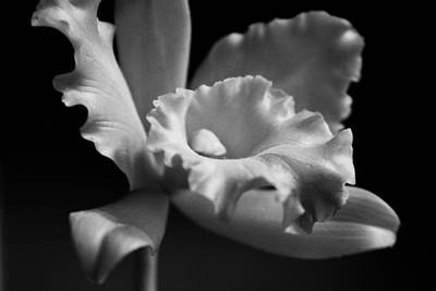 Photograph - Black And White Bloom by Kelly Hazel