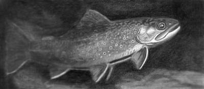 Brook Trout Drawing - Black And White Brookie by Quinton Chapman