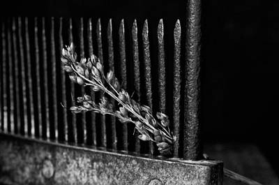 Photograph - Black And White Broom Comb And Corn by Wilma  Birdwell