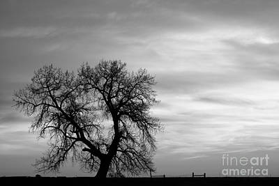 Bringing The Outdoors In - Black and White Country Morning by James BO Insogna
