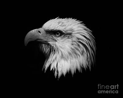 Art Print featuring the photograph Black And White Eagle by Steve McKinzie