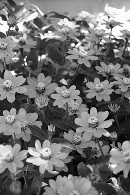 Black And White Flowers Art Print by Amy Fose