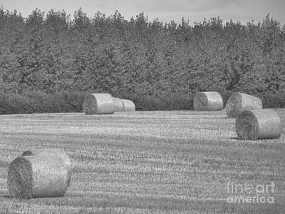 Black And White Hay Bales Art Print by Andrew May