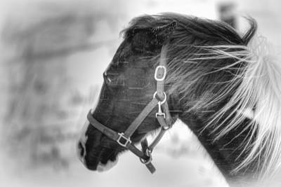 Black And White Horse Portrait Art Print by Gary Smith