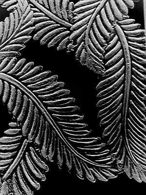 Black And White Leaves Art Print by Tanya Moody