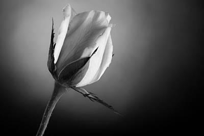 Black And White Soft Rose Art Print by M K  Miller