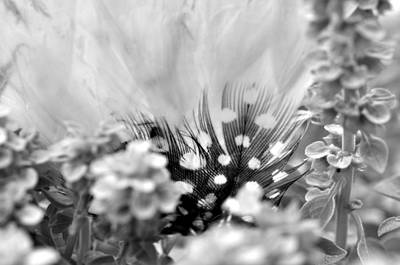 Photograph - Black And White Spotted Feather In Black And White  by Puzzles Shum
