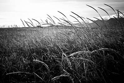 Photograph - Black And White Tall Grass by Anthony Doudt