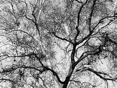Black And White Tree Original by Scott Shaver