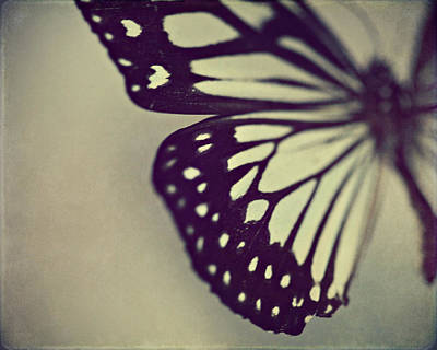 Insects Photograph - Black And White Wings by Amelia Kay Photography