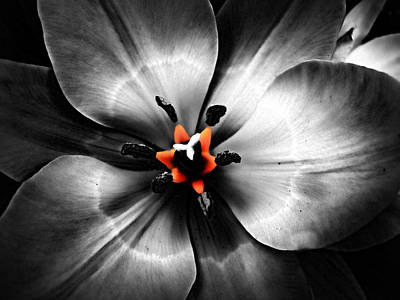 Black And White With A Glow Of Color Art Print by Nick Kloepping