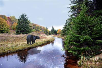 Photograph - Black Bear Beside Stream by Dan Friend