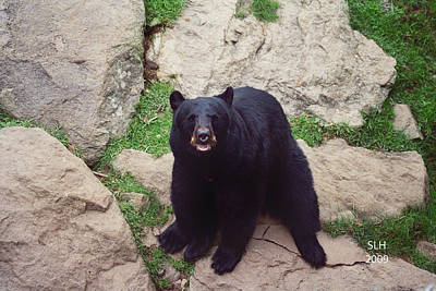 Photograph - Black Bear by Lee Hartsell