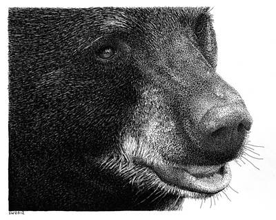 Drawing - Black Bear by Scott Woyak
