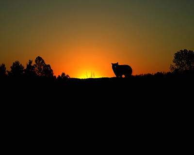 Black Bear Sunset Art Print
