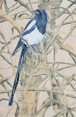 Magpies Mixed Media - Black-billed Magpie by Ross Michaels