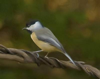 Painting - Black-capped Chickadee by Steven Richardson