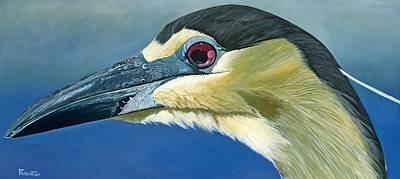Black Capped Night Heron Art Print by Jon Ferrentino